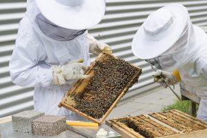 Jamaika will mehr Tierschutz und weniger Pestizide