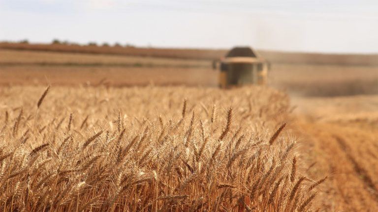 Die Landwirtschaft wird Milliarden-Verluste einfahren