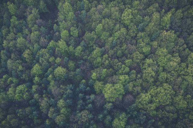 Warum interessiert es keinen, dass für Windräder auch Wald gerodet wird?