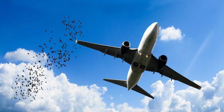 Wer fliegt, fördert Tierversuche