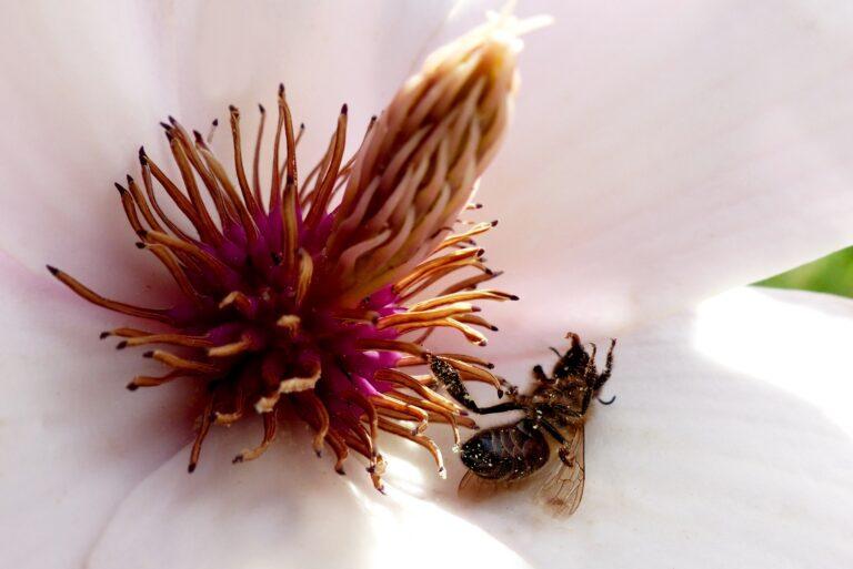 Volksbegehren für mehr Artenvielfalt: Wie du die Bienen von zu Hause aus retten kannst