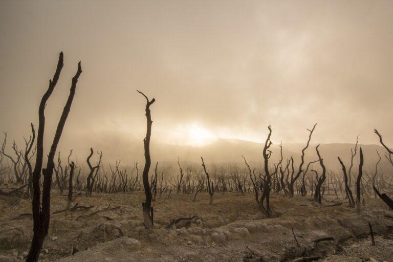Die übersehenen Folgen der Klimakrise in Somalia
