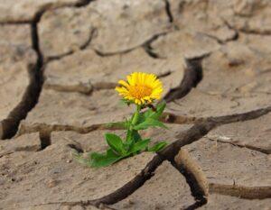 Drastische Maßnahmen dürfen beim Klimaschutz kein Tabu sein