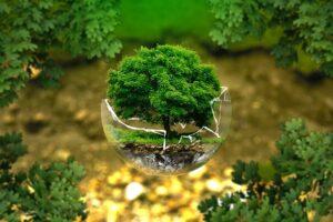 Warum mehr Bäume kein Allheilmittel für den Umweltschutz sind